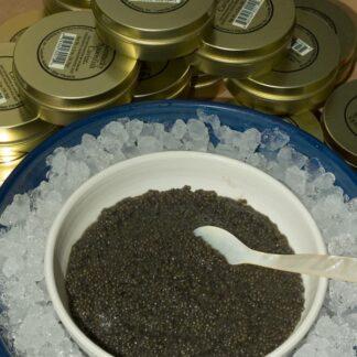 spoonfish_caviar_lg